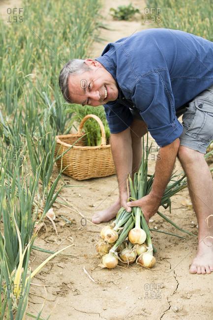 Smiling farmer harvesting organic onion from farm