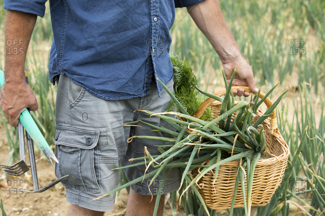 Farmer standing while holding vegetable basket and gardening equipment at farm