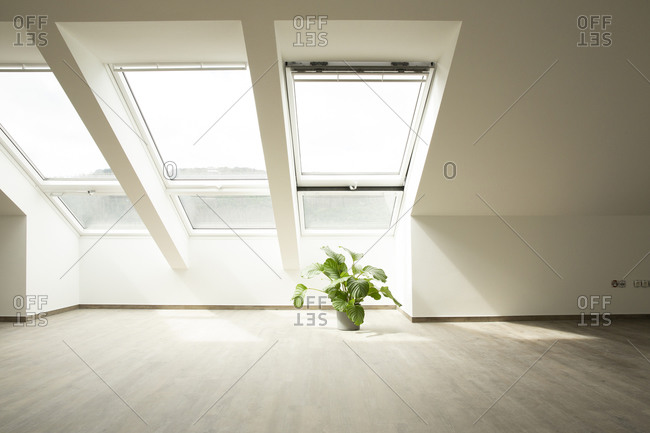 Calathea on floor against window in new house
