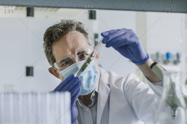 Male scientist looking at a plant in a test tube in a laboratory