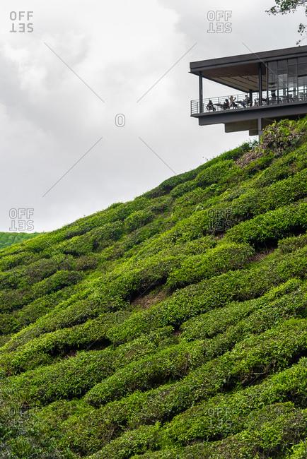 March 28, 2018: Tea center in a tea plantation. Cameron Highlands, Malaysia