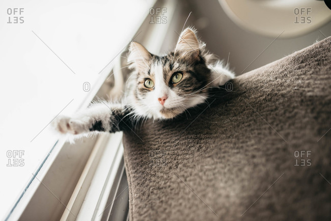 Cat looking out window over edge of sofa by window