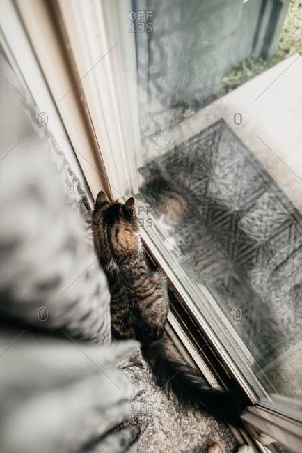 Overhead view of cat looking out glass door