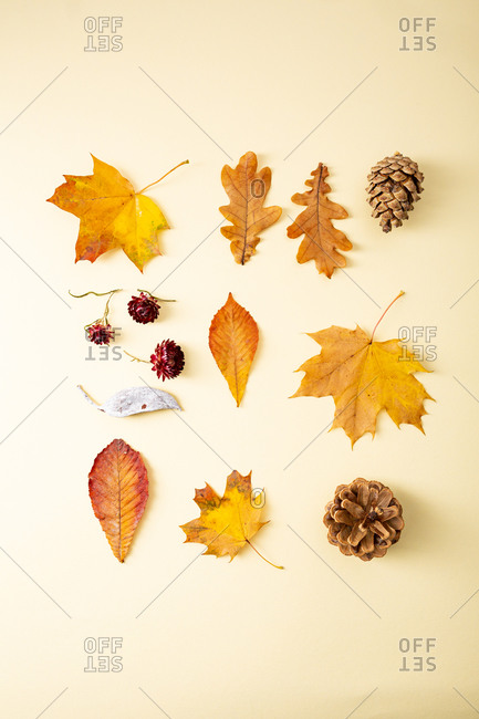 Arrangement of forest yellow leaves, flowers and pinecones on light surface