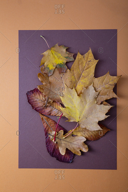 Collection of yellow and brown leaves on paper surface