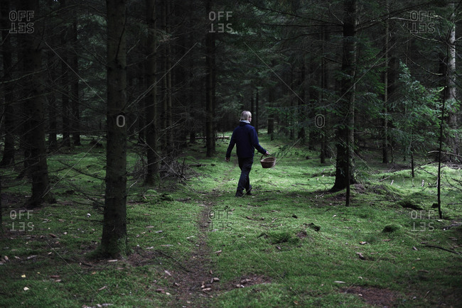 Man walking in the forest foraging for mushrooms