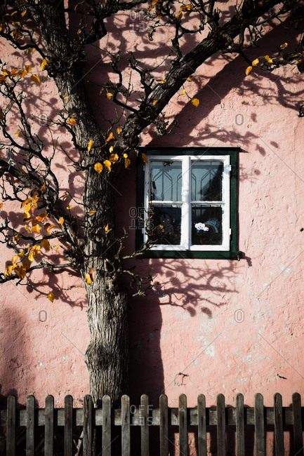 Old tree with bare branches growing in yard of weathered rural house with pink stone wall and small window in autumn countryside