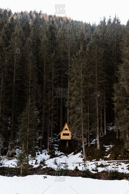 Lonely wooden shack located on slope with snow in woods with tall evergreen trees in winter