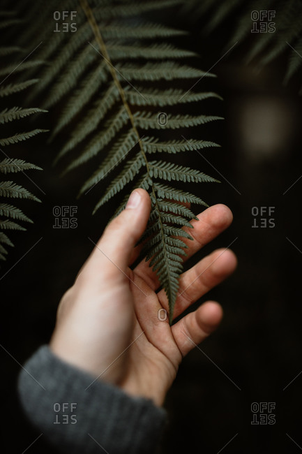 Unrecognizable crop person standing in dark woods and gently touching green leaf of fern in Scottish Highlands