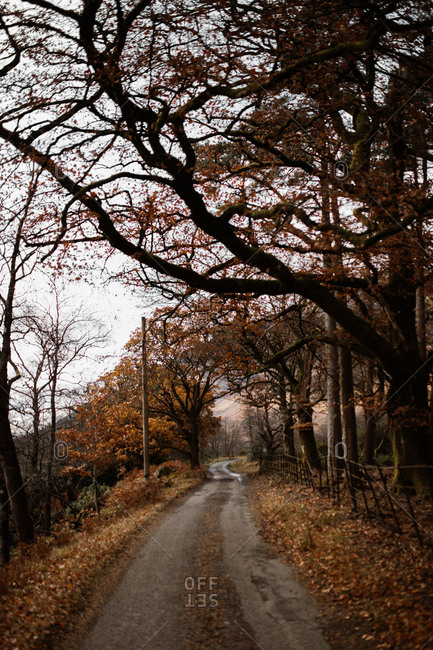 Empty sandy road surrounded by leafless trees in autumn on cloudy day in Scottish Highlands