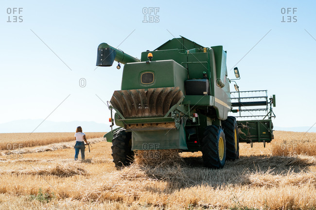 Back view of unrecognizable female farmer walking along wheat field with huge combine harvester