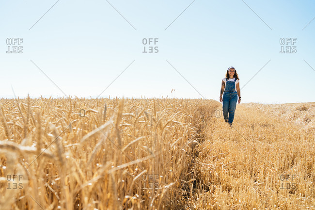 Carefree female in denim overalls walking along wheat agricultural field and admiring amazing rural landscape in summer