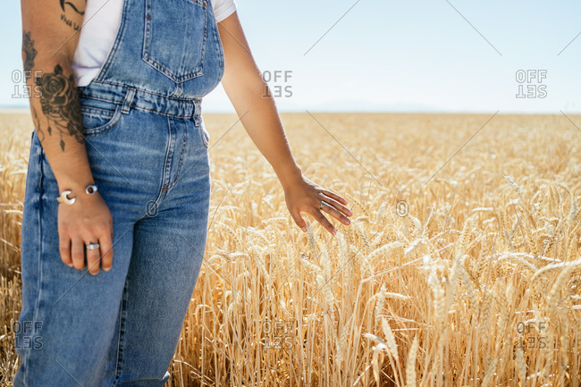Cropped unrecognizable female in denim overalls standing along wheat agricultural field and admiring amazing rural landscape in summer