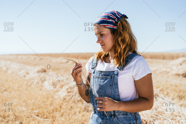 Relaxed female in casual clothes standing with wheat spikelet in agricultural field in village
