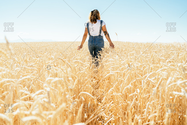 Back view of unrecognizable carefree female in denim overalls walking along wheat agricultural field and admiring amazing rural landscape in summer
