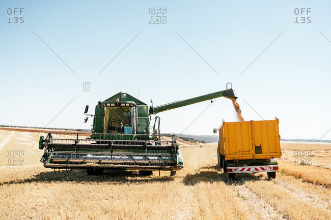 Huge combine harvester collecting and pouring wheat grain in trailer placed on farm in summer