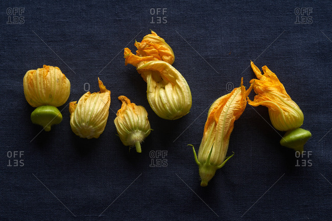 Fresh raw zucchini flowers on dark blue linen tablecloth