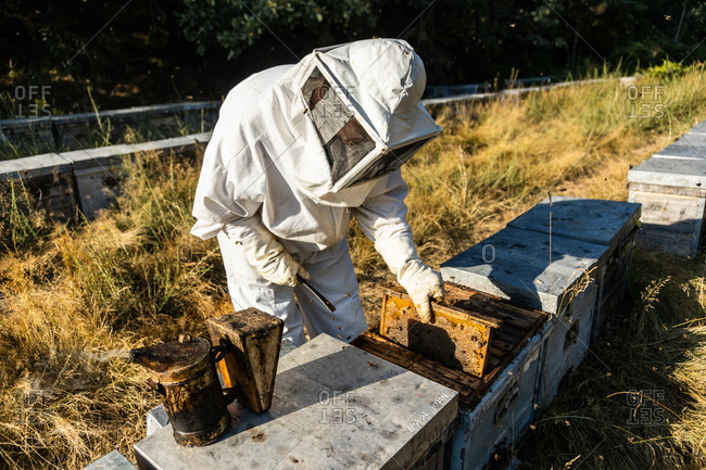Anonymous beekeeper in protective gloves fumigating beehive with smoker while working on apiary in sunny day