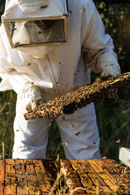Male beekeeper in white protective costume taking honeycomb frame from hive while working in apiary in sunny summer day