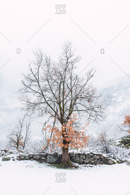 Picturesque scenery of leafless tree growing on hill in highlands on cloudy day in winter in Pyrenees