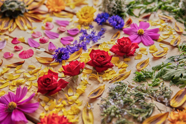 Assorted colorful flower petals and delicate buds arranged in lines on wooden table