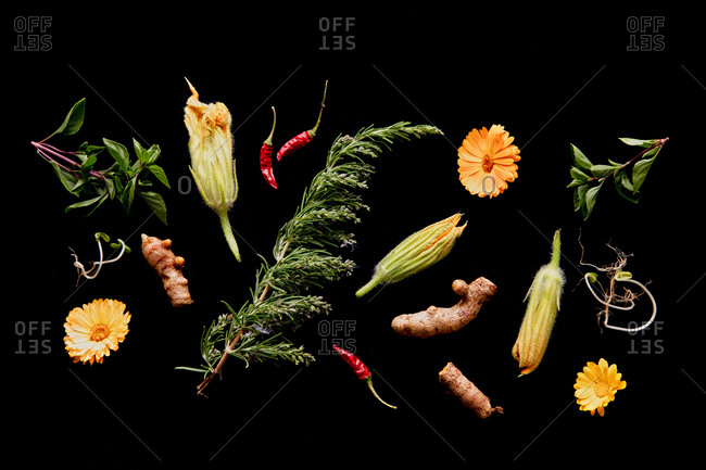 Top view of assorted ripe greenery and flower buds arranged on black background in studio