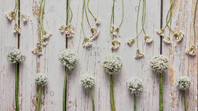 Top view of various white wildflowers arranged on shabby wooden table at home