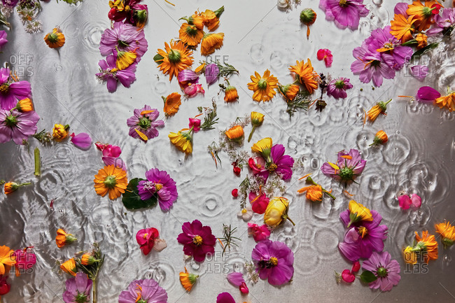 Top view of various flower petals and buds floating on water surface in studio