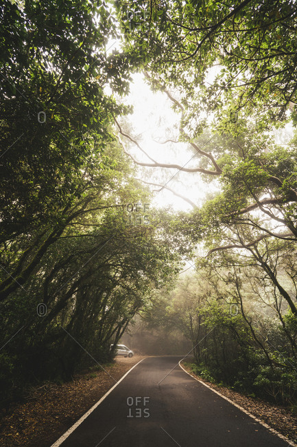 Lonely modern automobile driving through foggy woods on empty asphalt roadway in Tenerife