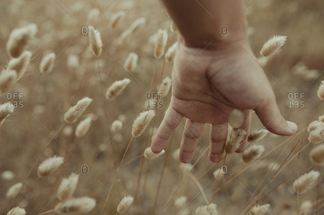 Unrecognizable crop tender person gently touching dry stems of plants in meadow in summer