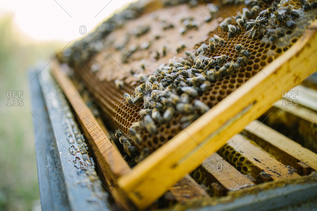 Beehive with wooden honeycombs located in apiary in countryside in summer on sunny day
