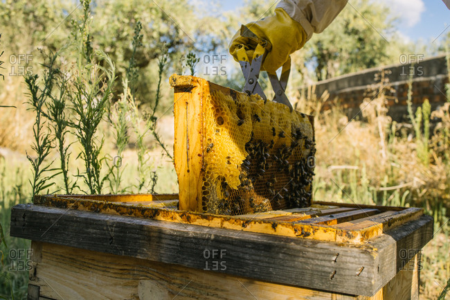 Crop unrecognizable beekeeper in protective uniform working in apiary and collecting honey while standing in summer garden