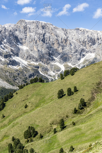Sparse trees of Swiss stone pine (Pinus cembra) of green woodland, Dolomites, Trentino-Alto Adige, Italy, Europe