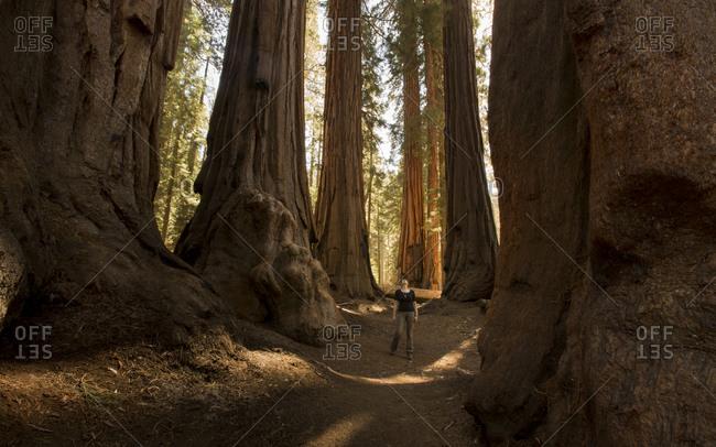 USA- California- Sequoia National Park- Sequoia tree and woman- sun light