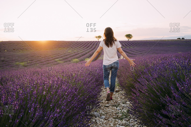 France- Valensole- back view of woman walking between blossoms of lavender field at sunset