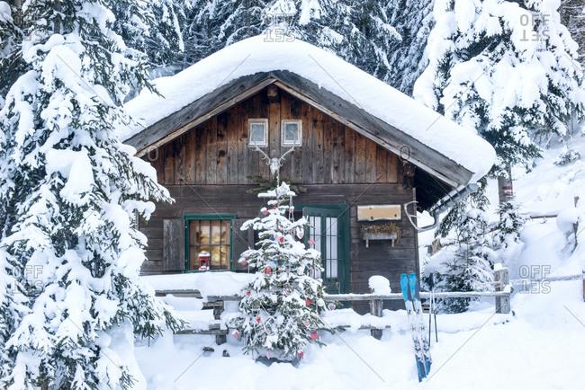 Austria- Altenmarkt-Zauchensee- Christmas tree at wooden house in snow