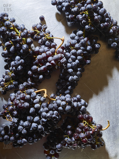 Black and red grapes for wine making