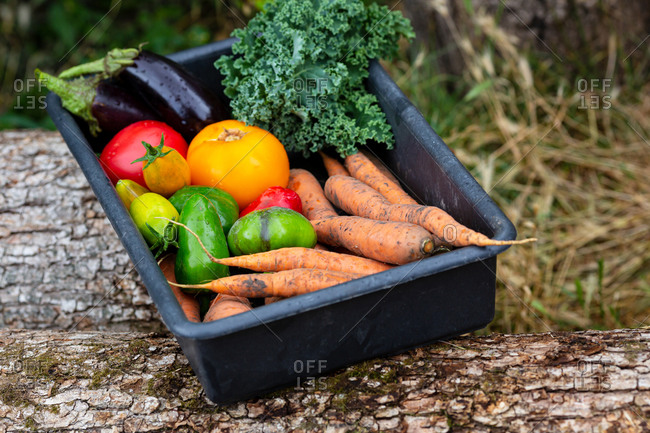 Organic vegetables outdoors in a black box