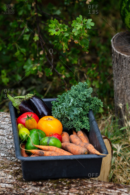 Organic vegetables set in box outdoor