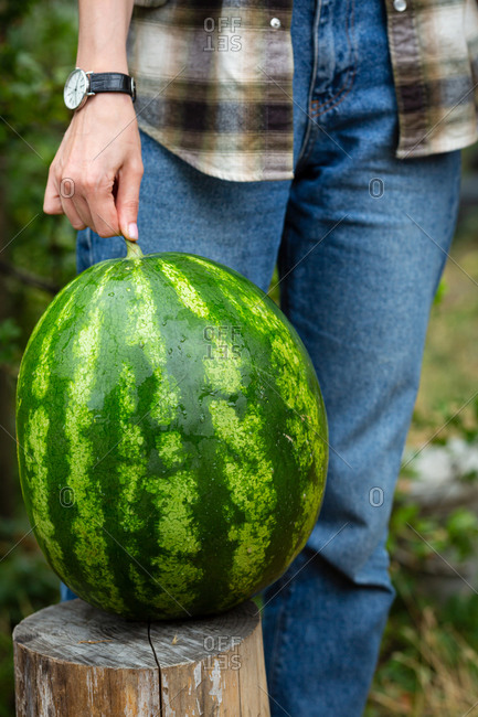 Woman holding one large watermelon in garden