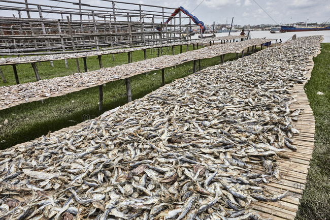 Abundance of fish at a dry fish factory on Karnaphuli River bank, Chittagong, Bangladesh