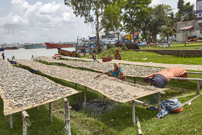 Chittagong, Bangladesh - May 11, 2013: People working at a dry fish factory on Karnaphuli River bank with old rusty ships visible in the back