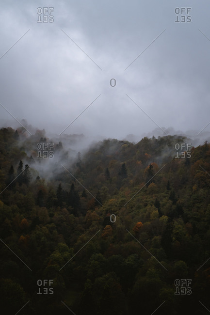 View of the forest during autumn on a dark foggy day