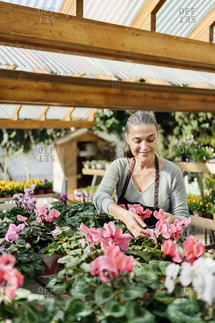 Beautiful middle aged woman working in plant nursery.