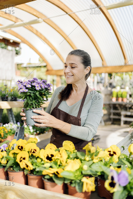 Beautiful middle aged woman working in plant nursery and holding a flower pot.