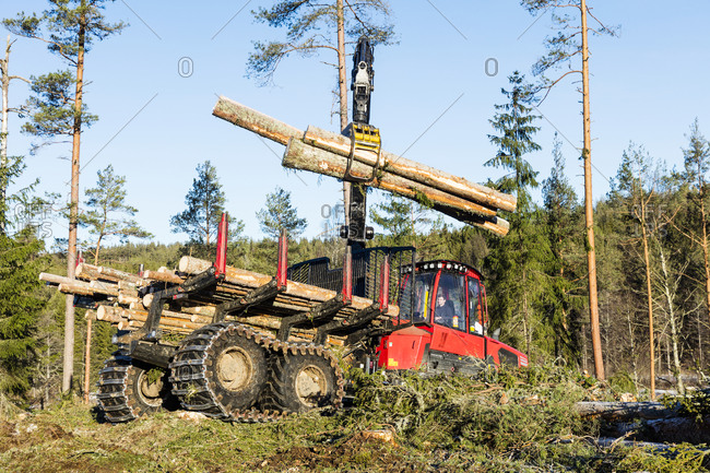 Crane loading logs on trailer. Detailed shot.