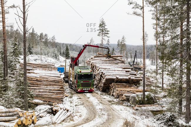 Crane loading logs on lorry. Detailed shot.