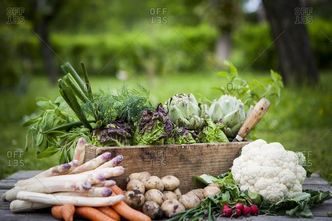 Various vegetables in garden. Detailed shot.