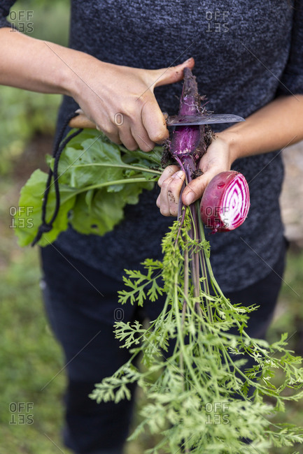 Womans hands cleaning purple carrot with knife