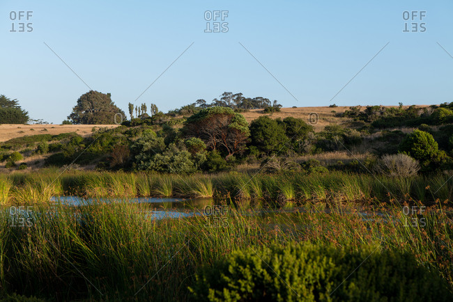California hillside with brown grass, green growth, and pond